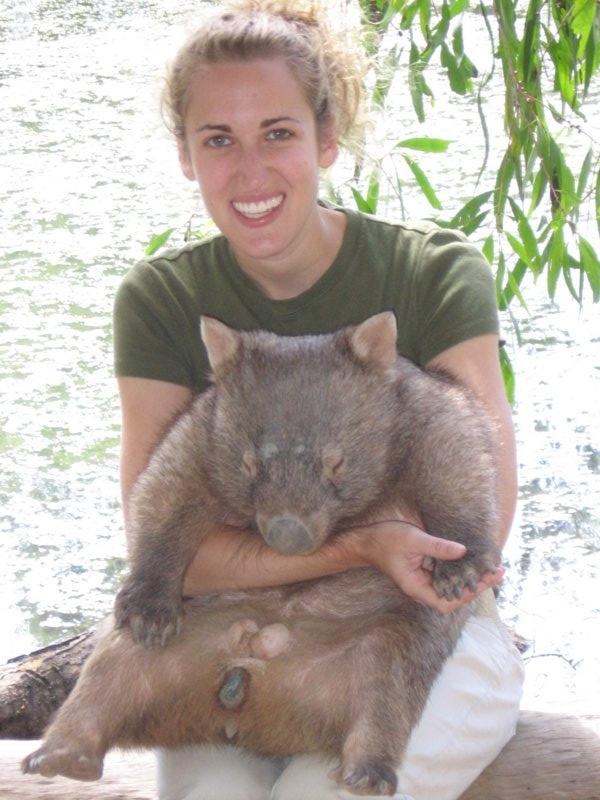 wombats kangaroos